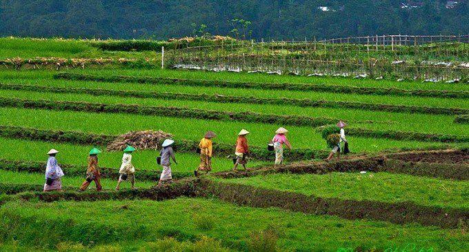 Desa agraris