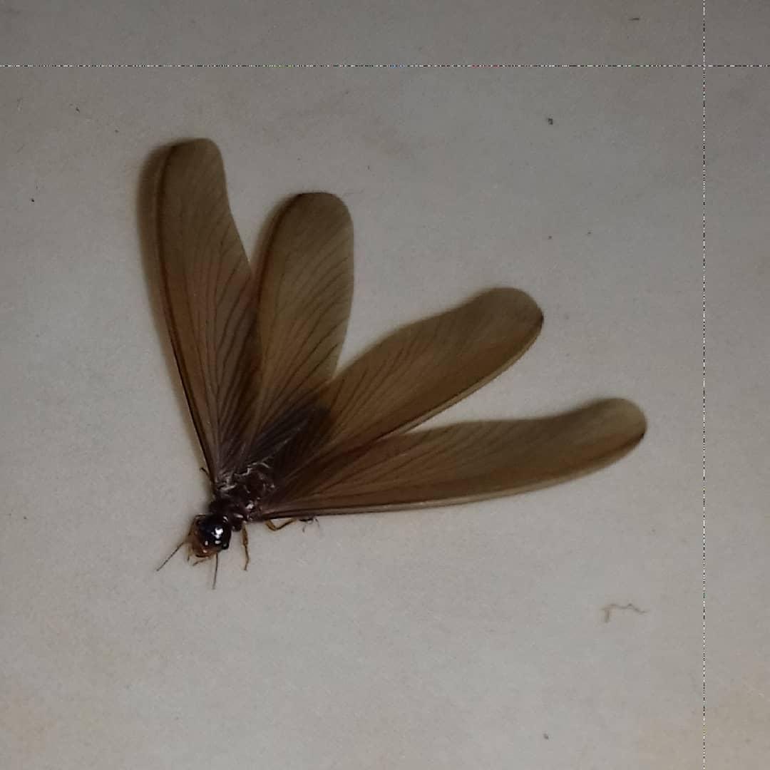 Cara Mengusir Serangga