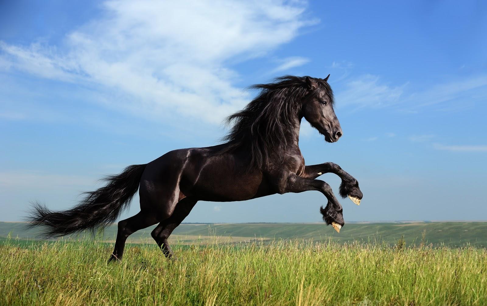 Cara Merawat Kuda Yang Baik dan Benar