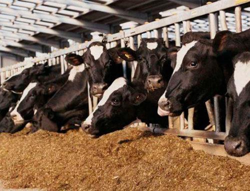Analisa Prospek Usaha Pakan Ternak bagi Industri Peternakan