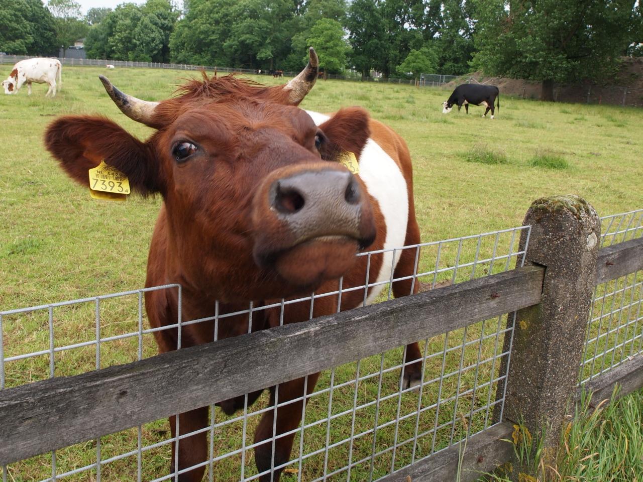 usaha pakan ternak