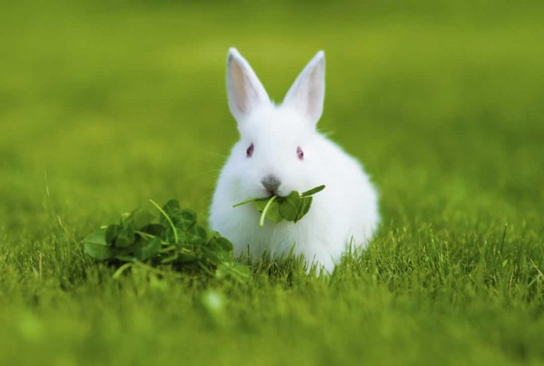 cara beternak kelinci
